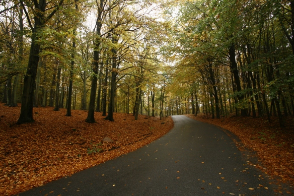 Biking through the forests of Bornholm
